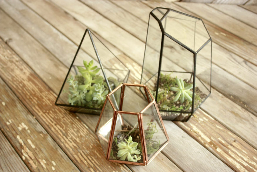 Super Easy DIY Terrariums